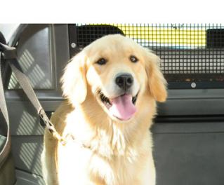 3_9_2012__0_DSC_9578.jpg - http://www.disquedenuncia.org.br/uploaded/3_9_2012__0_DSC_9578.jpg - PM apreende drogas em São Gonçalo com ajuda de cão farejador